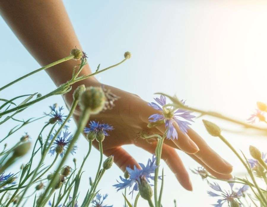 close-up-hand-sweeping-across-top-of-wild-flowers-in-field-sun-shining-mindfulness-blog-post