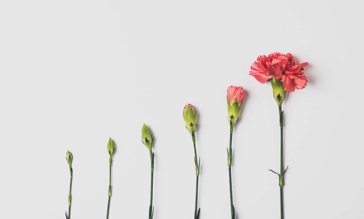 flatlay-flower-at-different-stages-of-growth-allowing-yourself-to-grow-blog-post
