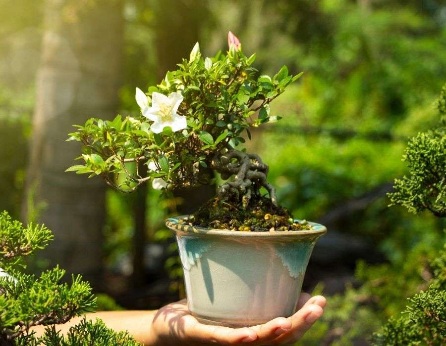 bonsai-in-ceramic-pot-on-outstretched-hand-the-importance-of-hobbies-blog-post